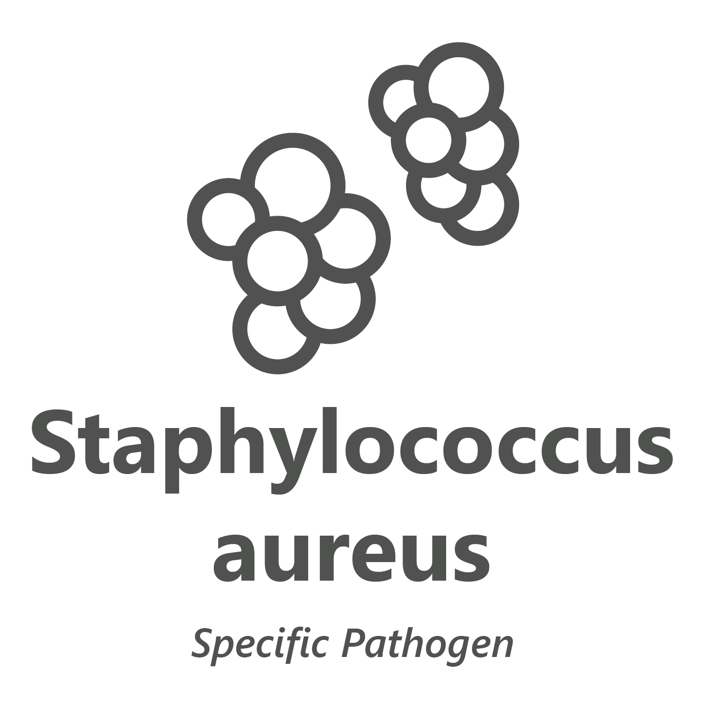Web store icon for Staphylococcus aureus microbiology test.